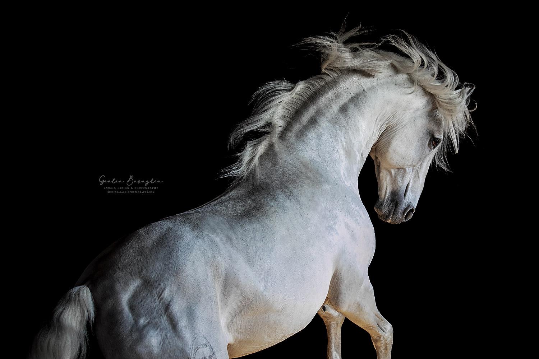 Lo Sfondo Nero Nella Fotografia Equestre Giulia Basaglia Photography
